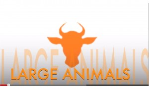 test electronique boucle identification large animal